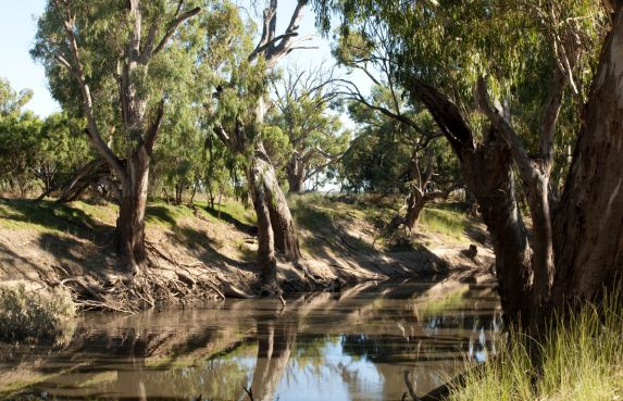 """""""Yaloke"""" 8257.9ac First time offered in 100 years, Deniliquin NSW 2710, Image 2"""