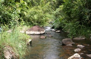 Picture of Millaa Millaa QLD 4886