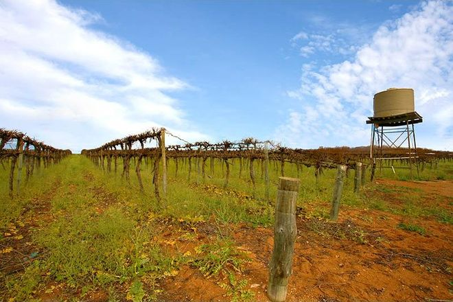 Picture of Wookata Vineyard 184 Stott Highway, SWAN REACH SA 5354