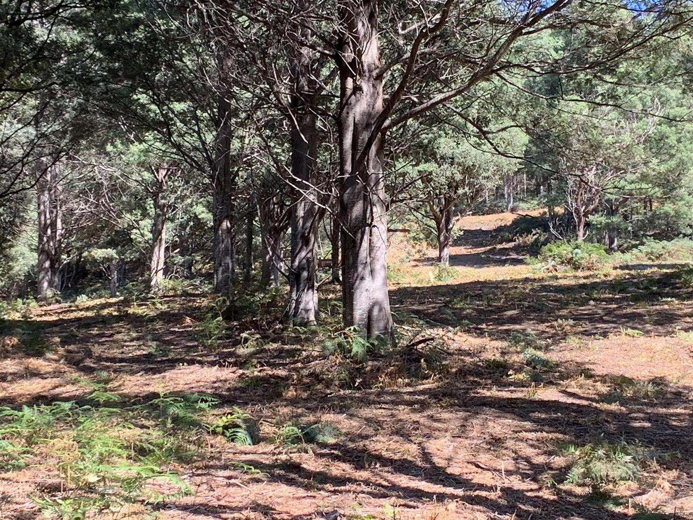 Lots 1 & 2 Off Bakers Creek Road, Lucaston TAS 7109, Image 1