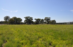 Picture of 69 Barney's Reef Road, Gulgong NSW 2852