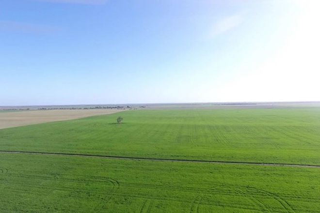 Picture of 10405 Mallee Highway, LAMEROO SA 5302