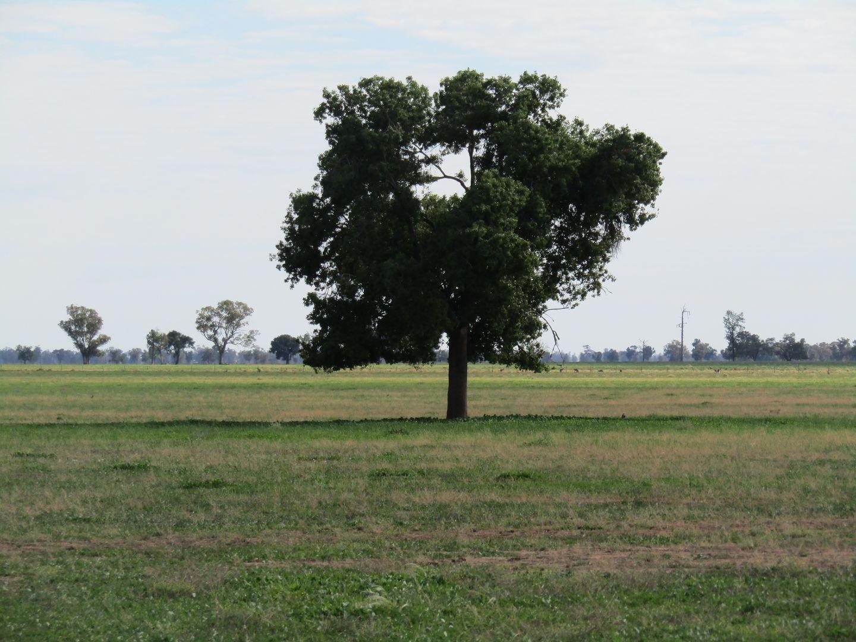 1535 Box Ridge  Road, Gulargambone NSW 2828, Image 2