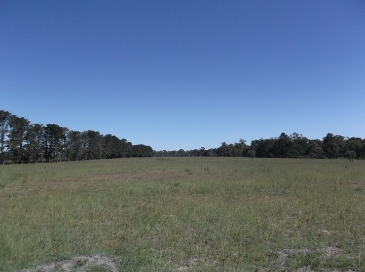 Lot 1 Cosmo Lane, Thulimbah QLD 4376, Image 2