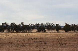 Picture of Fox Dale, Gilgandra NSW 2827