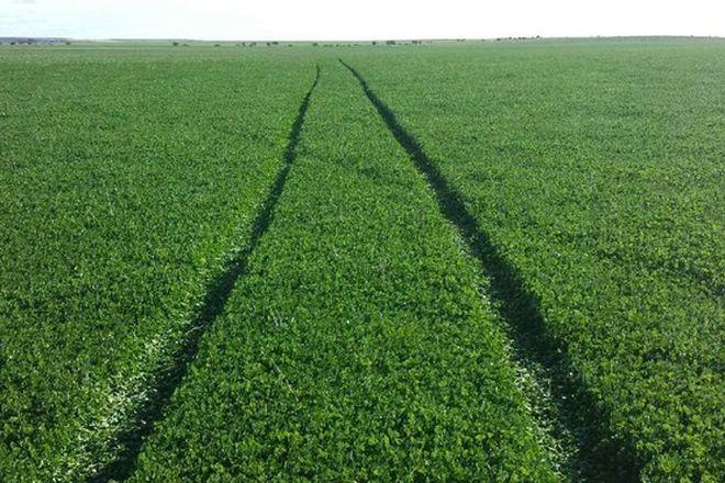 Picture of Di Russo Farms, HYDEN WA 6359