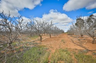Lot 4 Barnetts Road, Red Cliffs VIC 3496