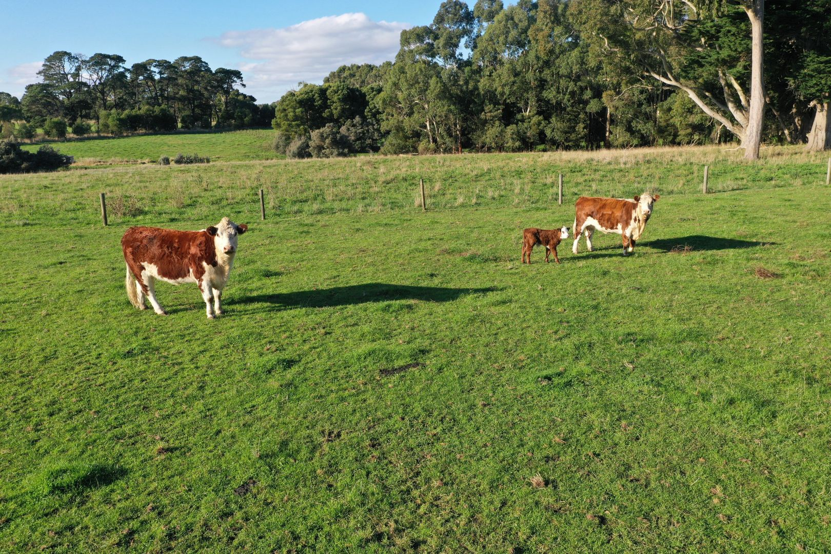 Lot 4/PS 436974 Timboon-Nullawarre Road, Brucknell VIC 3268, Image 2