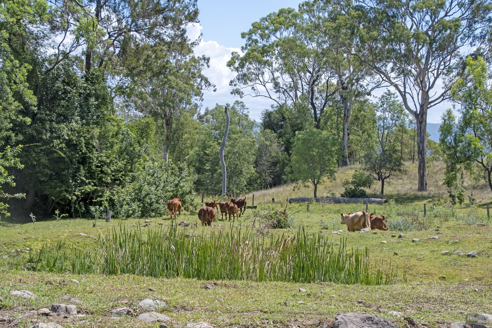 59 Coleyville Cemetery Road, Coleyville QLD 4307, Image 0