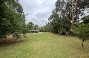 Picture of 5 Cup Gum  Grove, Heathfield SA 5153