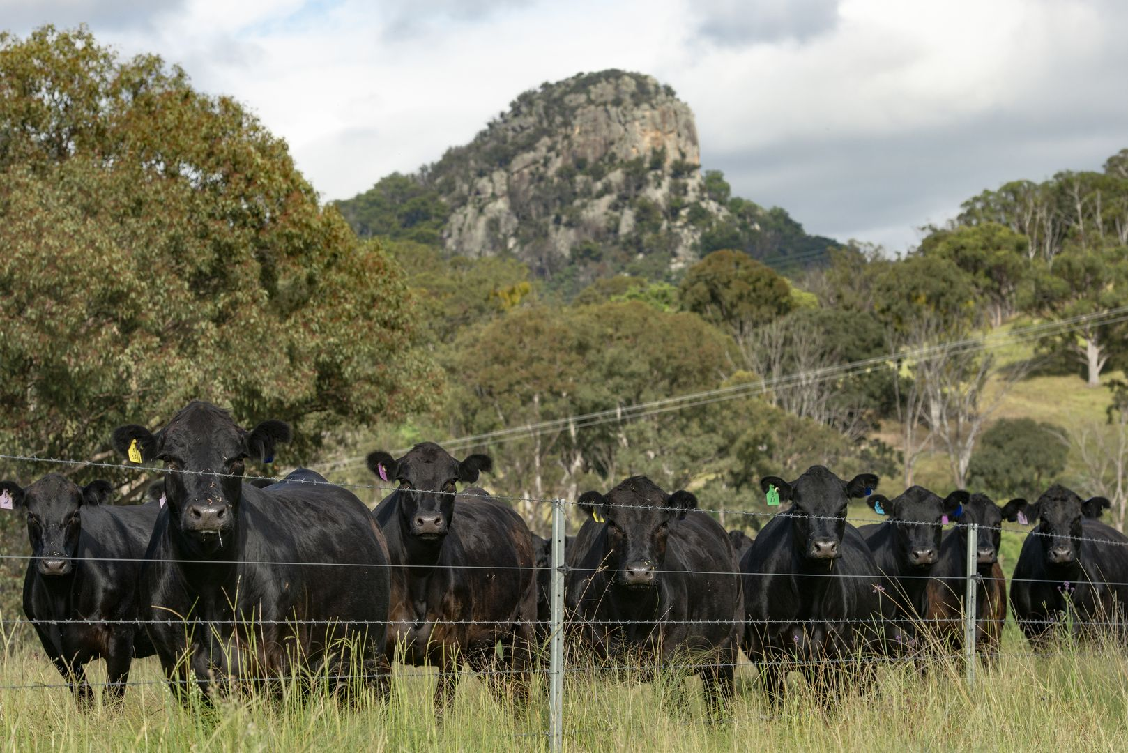 7784 NEW ENGLAND HWY, Tenterfield NSW 2372, Image 1