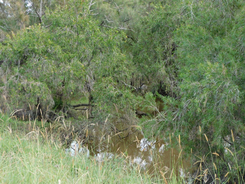 140 Dobies Bight Road, Dobies Bight NSW 2470, Image 2