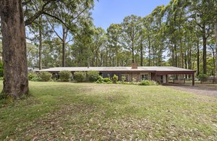 Picture of 319 Kinglake-Glenburn Rd, Kinglake VIC 3763