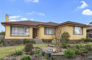 Picture of 13 Stork Avenue, Belmont VIC 3216