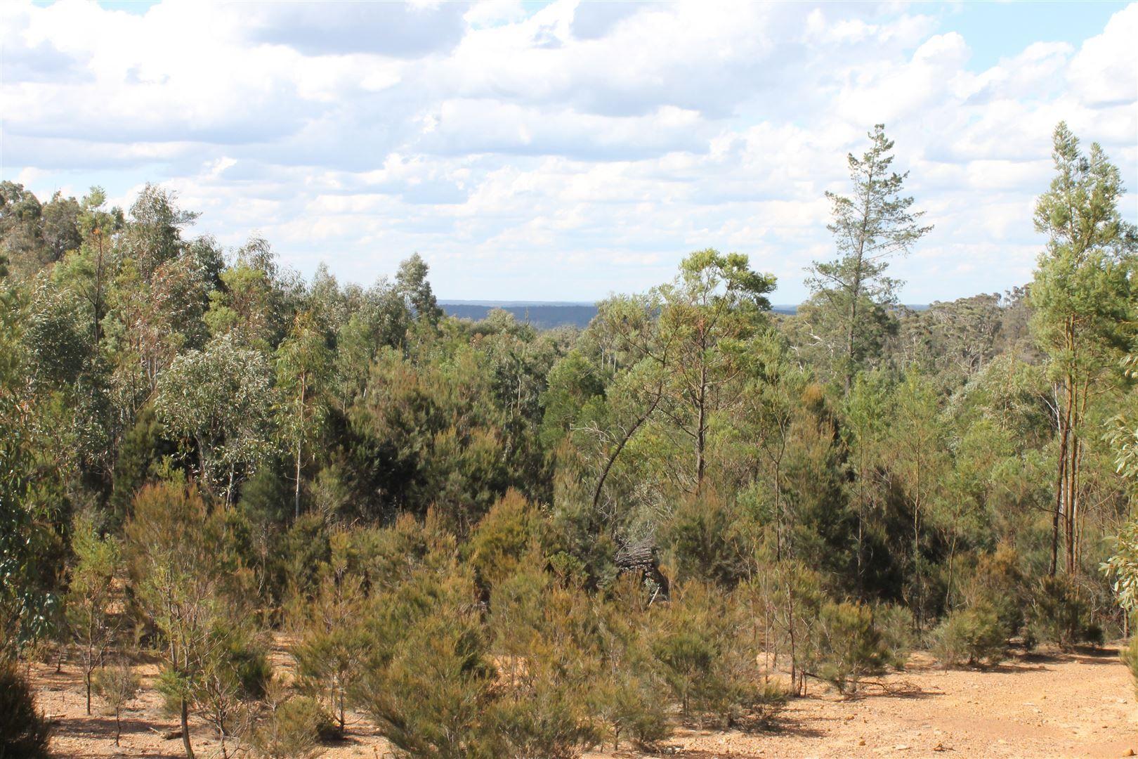 Corner Nerriga and Hobbs Creek Roads, Braidwood NSW 2622, Image 0