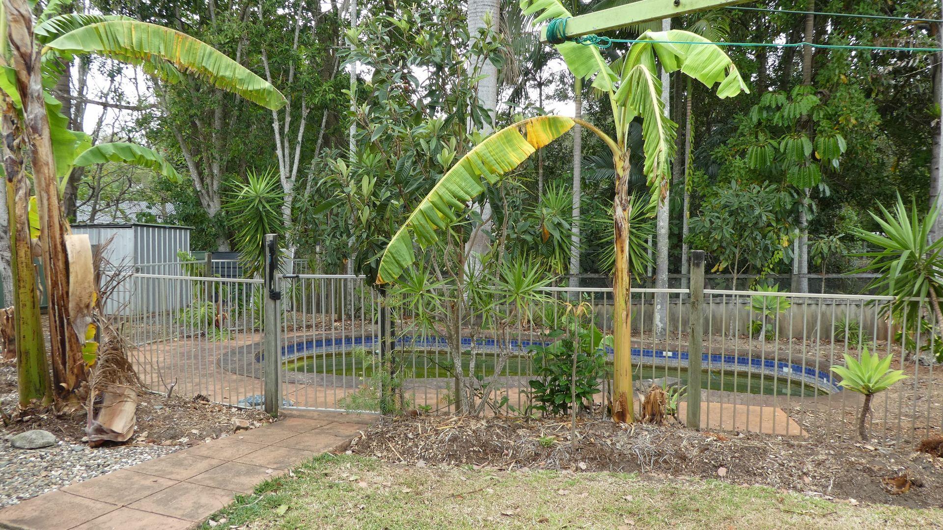 4 IRENE PLACE, Palmwoods QLD 4555, Image 1