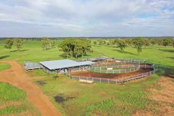 Picture of 502 Mt Lonsdale Road, MUNGALLALA QLD 4467