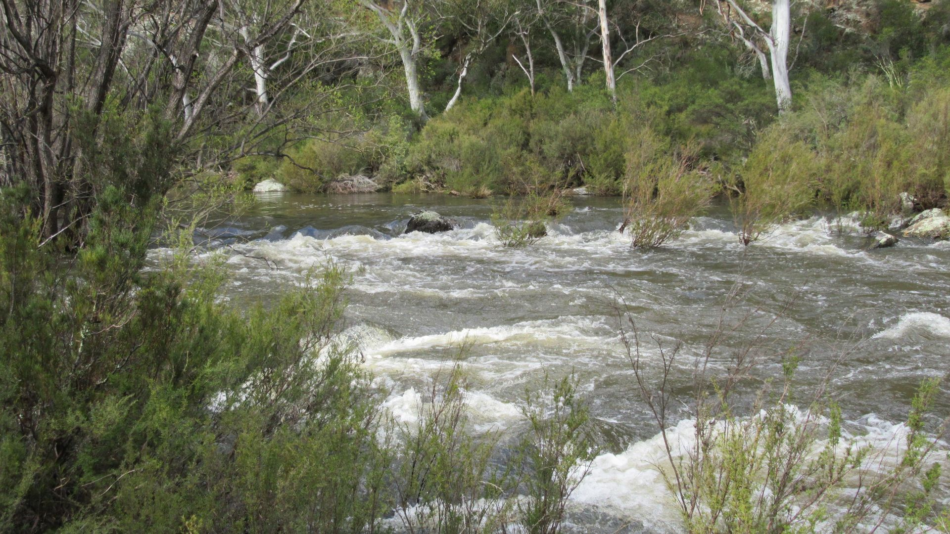 466 Caddigat Rd, Dry Plain NSW 2630, Image 2