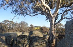 Picture of 127 Iron Post Lane, Burrumbuttock NSW 2642