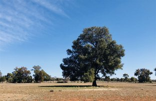 Picture of ' Wendy Park ', Tottenham NSW 2873