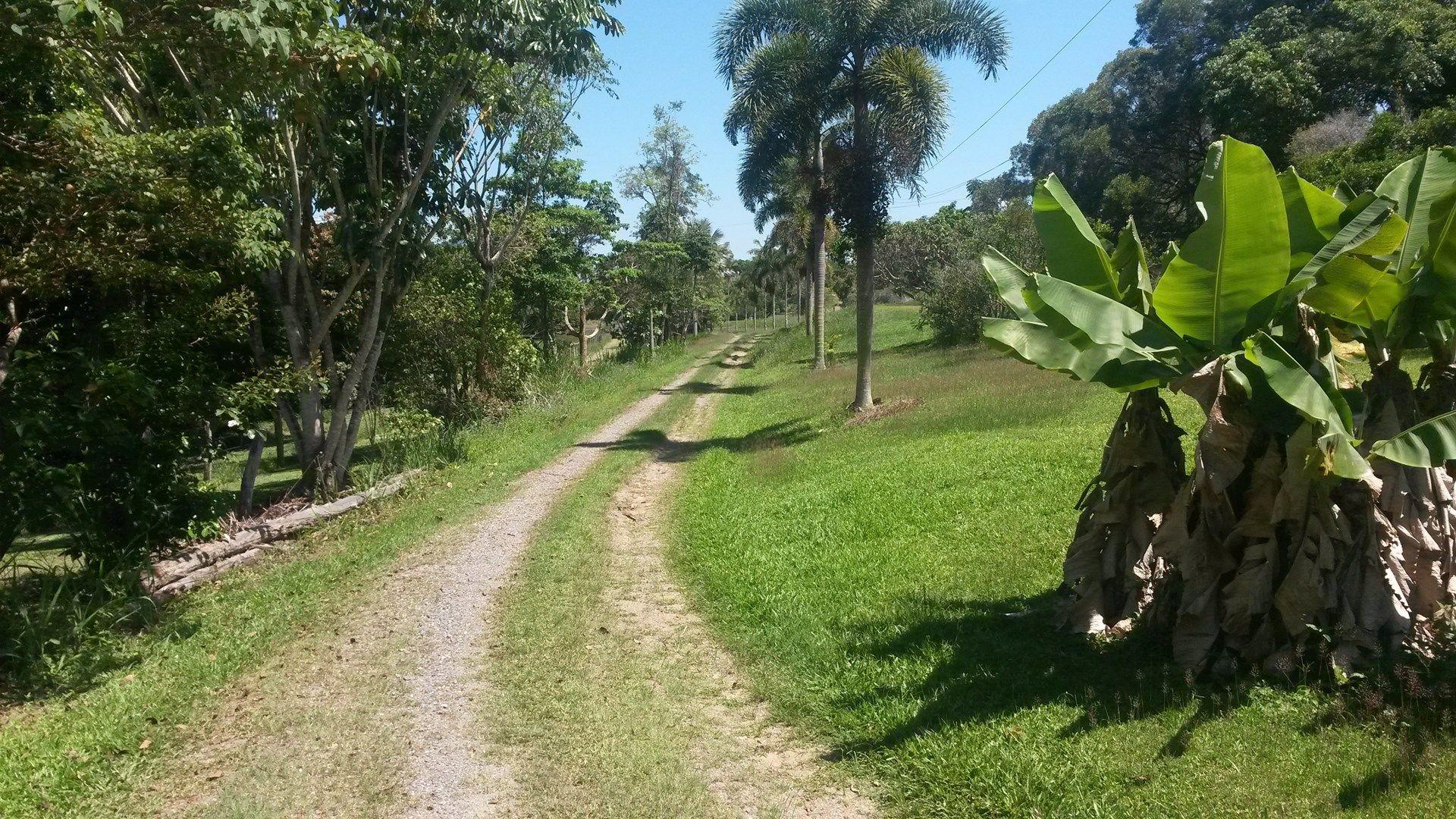 1250 Mossman-Mount Molloy Road, Julatten QLD 4871, Image 0