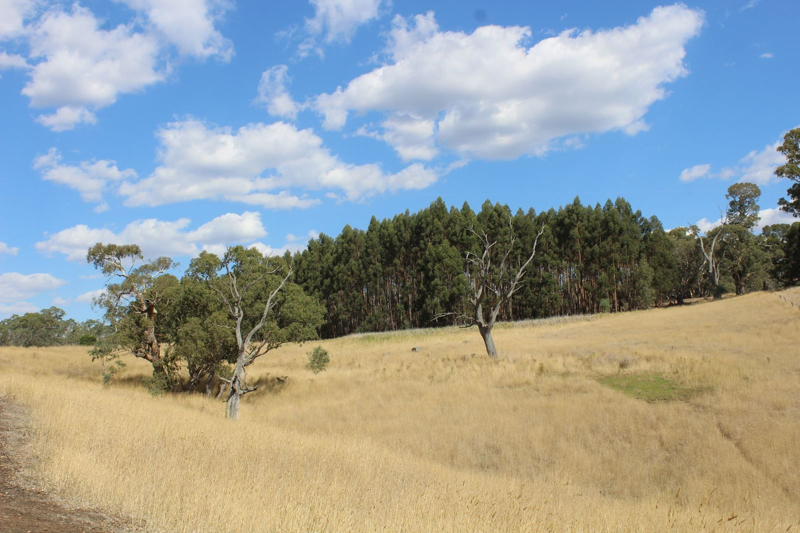 """""""Tallengower"""" Tallengower Road, Chetwynd VIC 3312, Image 0"""