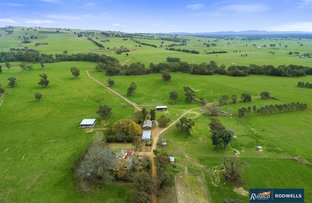 Picture of 360 Boggy Creek Rd, Moyhu VIC 3732