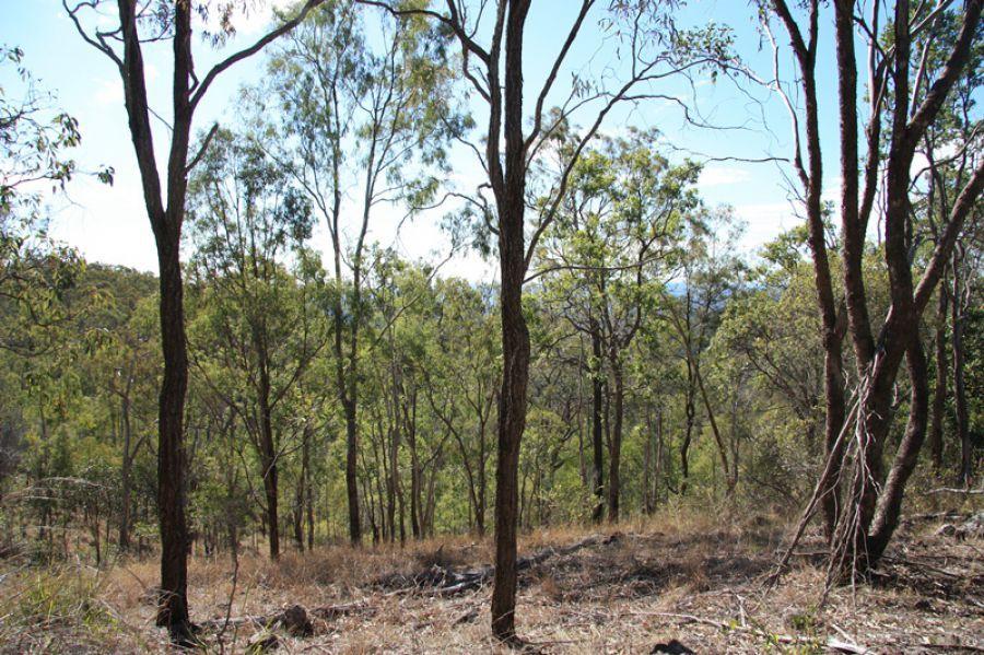Black Snake QLD 4600, Image 2