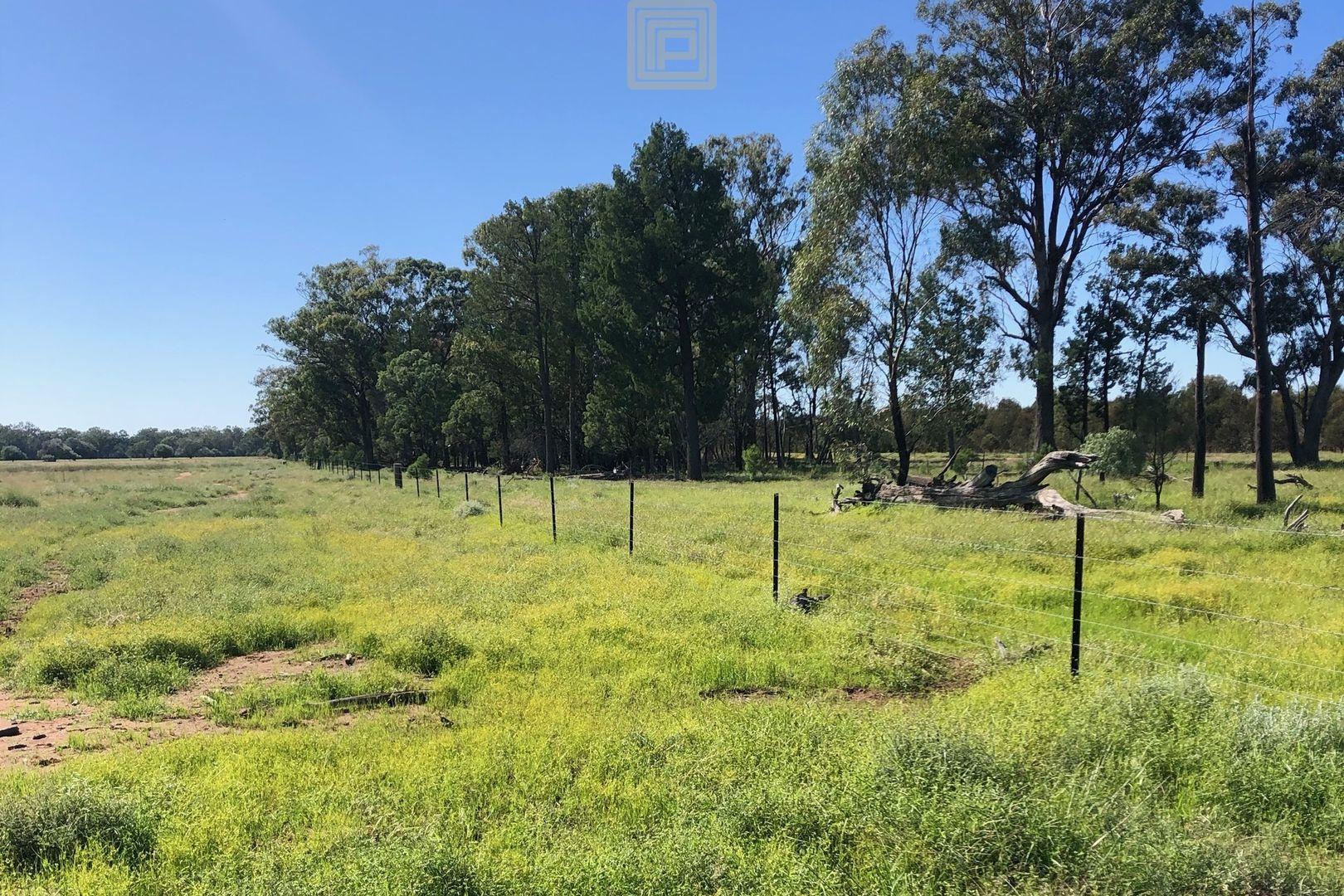 """""""Werona"""" 4316 Cypress Way, Gwabegar NSW 2356, Image 2"""
