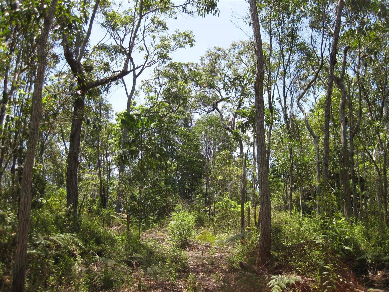 0 Tully-Mission Beach Road, McIntosh Road & East Feluga Road, East Feluga QLD 4854, Image 1