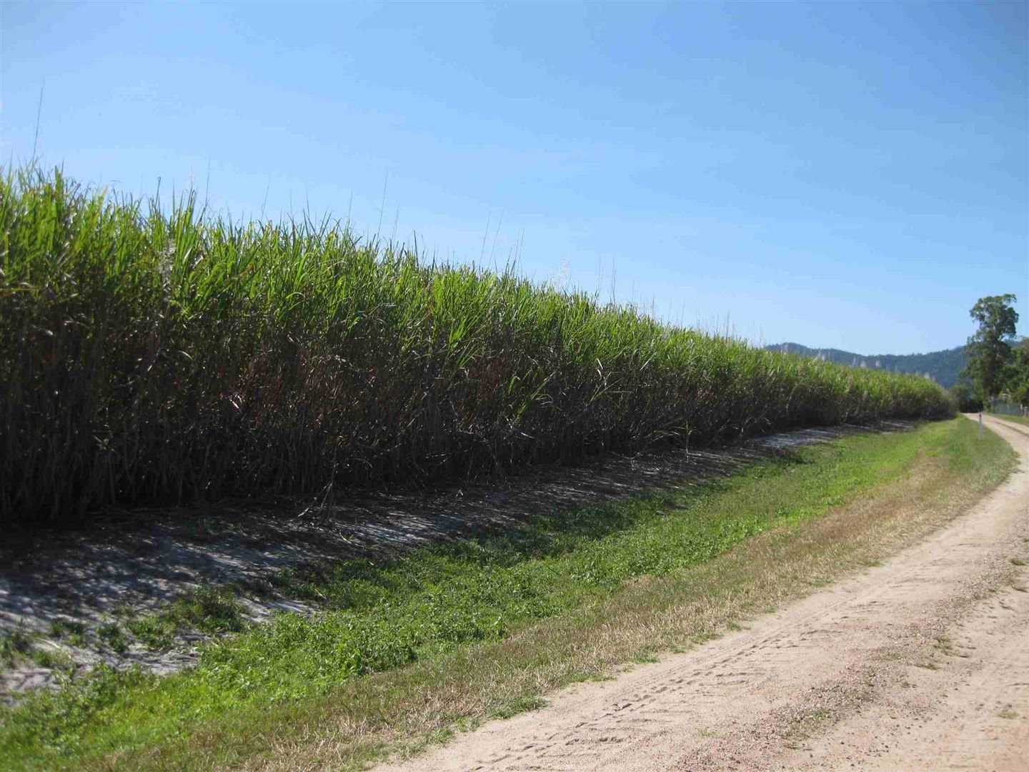 Lower Tully QLD 4854, Image 2