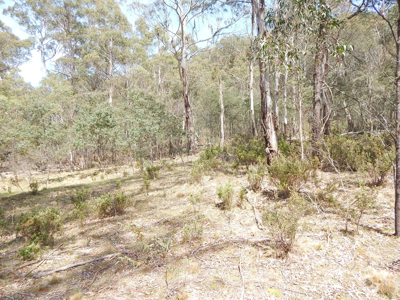 Lot 46 & 63 DP75055  Badja Road, Numeralla NSW 2630, Image 2