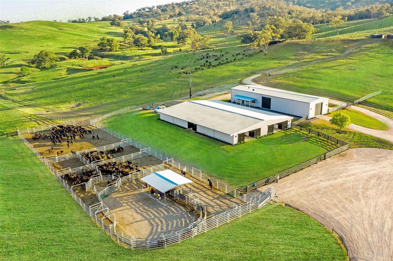 'Timor Cattle', Timor Creek Rd, Murrurundi NSW 2338, Image 0