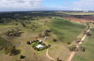 Picture of 165 Laheys Creek Road, Dunedoo NSW 2844