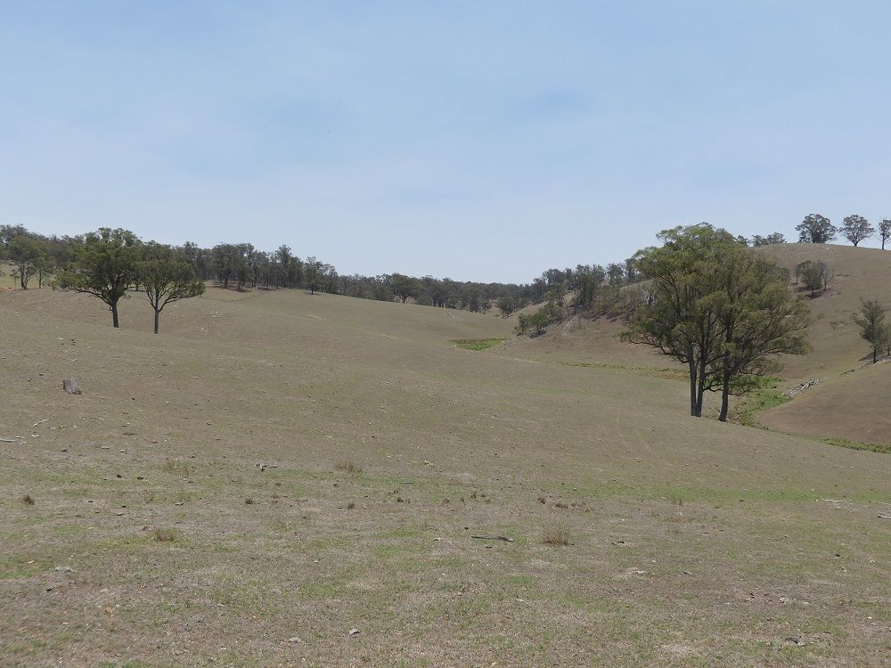 Kohinui Park Oaklands Rd, Yarrowitch NSW 2354, Image 0