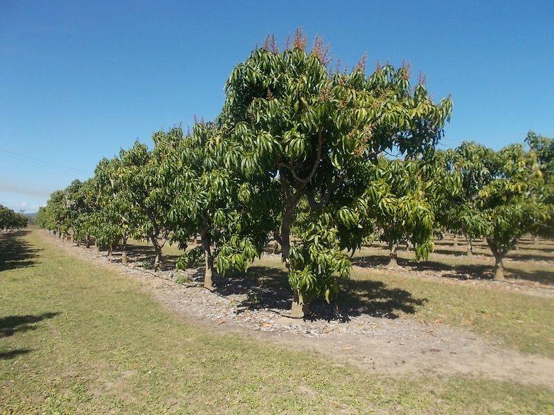 259 Murray Road, Woodstock QLD 4816, Image 0