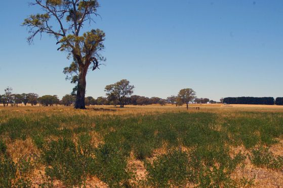 Lot 22 Hundred of Jessie, Naracoorte SA 5271, Image 0
