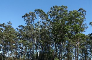 234 (Lot 929) The Ruins Way, Port Macquarie NSW 2444