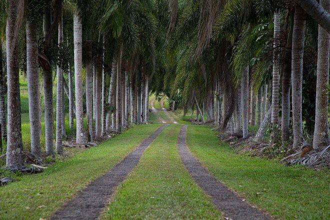 Picture of 145 Hill Sixty Road, EL ARISH QLD 4855