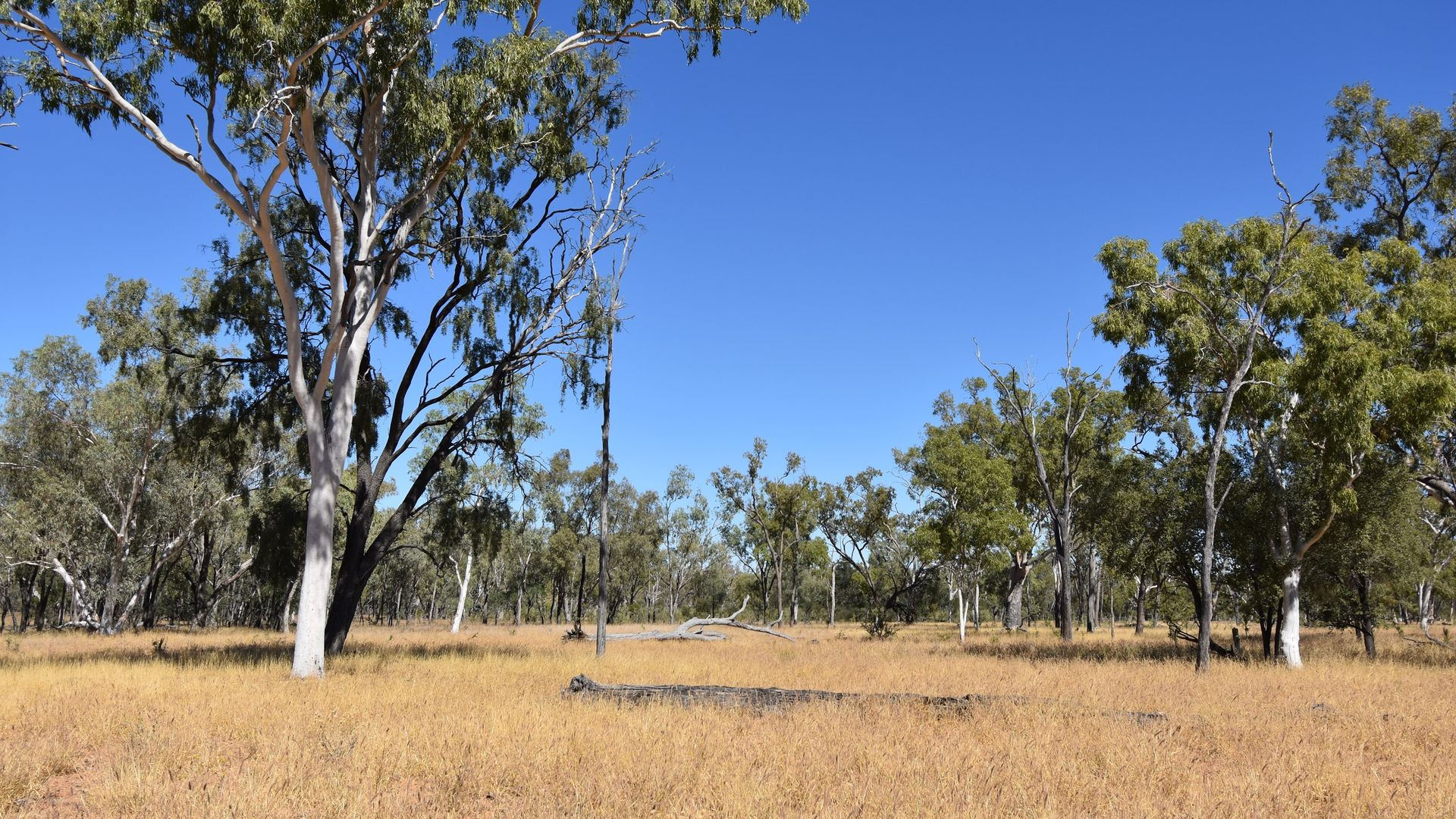 Landsborough Highway, Barcaldine QLD 4725, Image 1