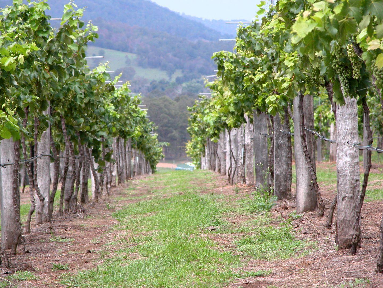 2884 Wallanbah road, Dyers Crossing NSW 2429, Image 0