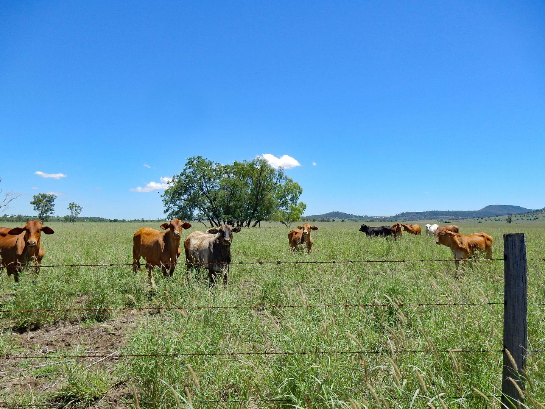 225 Biloela Callide Road, Mount Murchison QLD 4715, Image 2