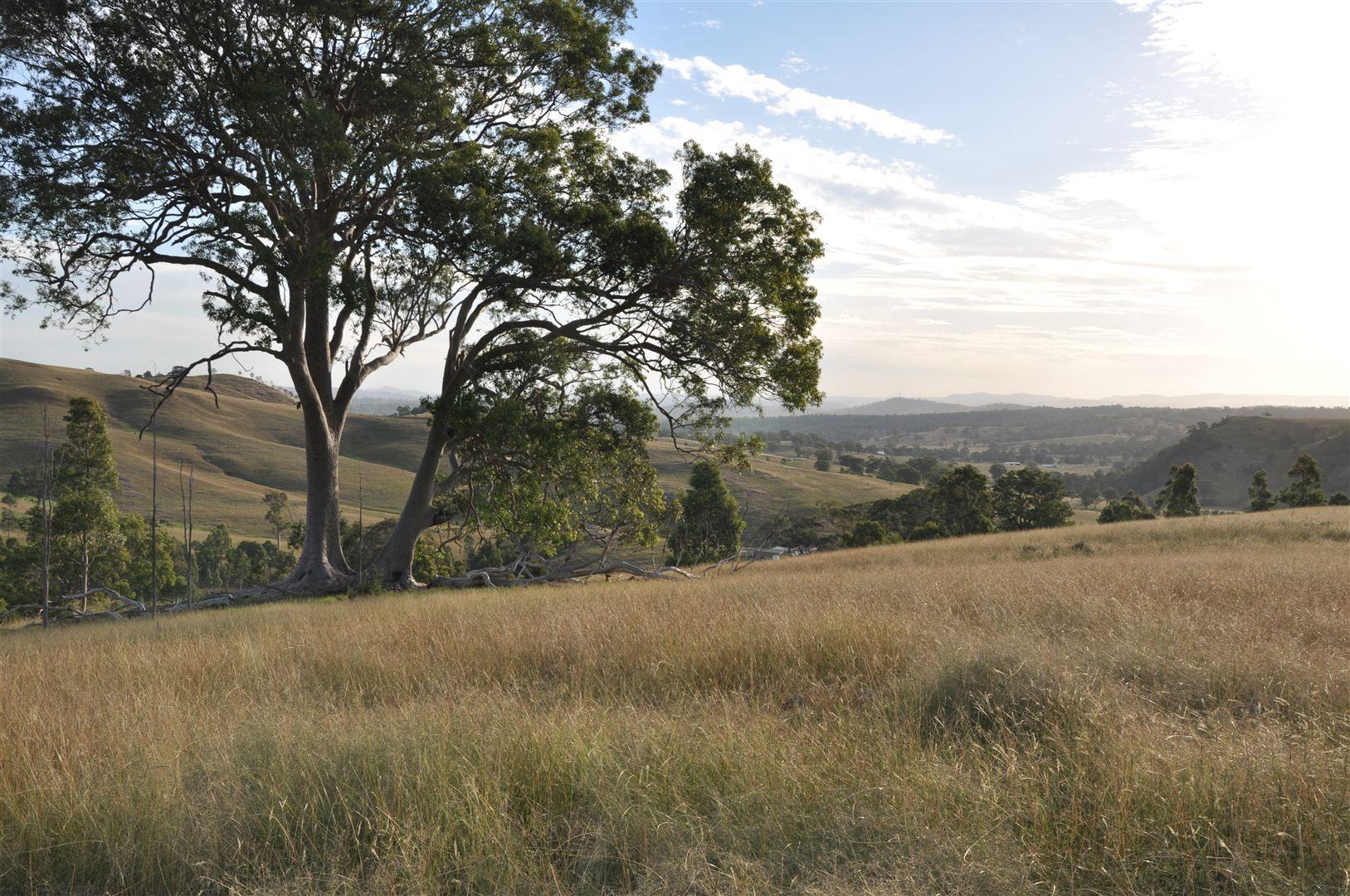 816 Muscle Creek Road, Muswellbrook NSW 2333, Image 0