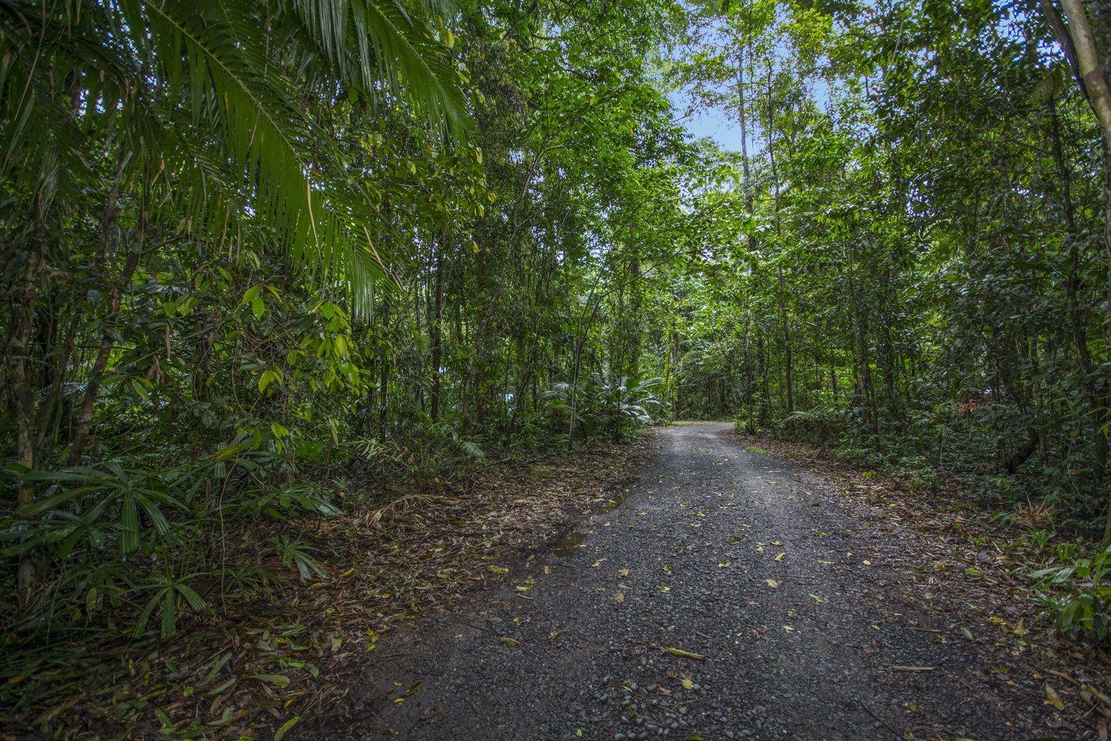 157 Cape Tribulation Road DIWAN, Daintree QLD 4873, Image 1