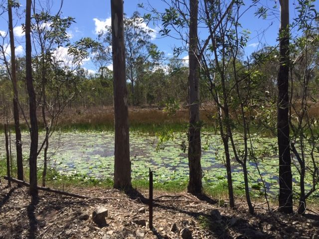 873 Round Hill Rd, Captain Creek QLD 4677, Image 2