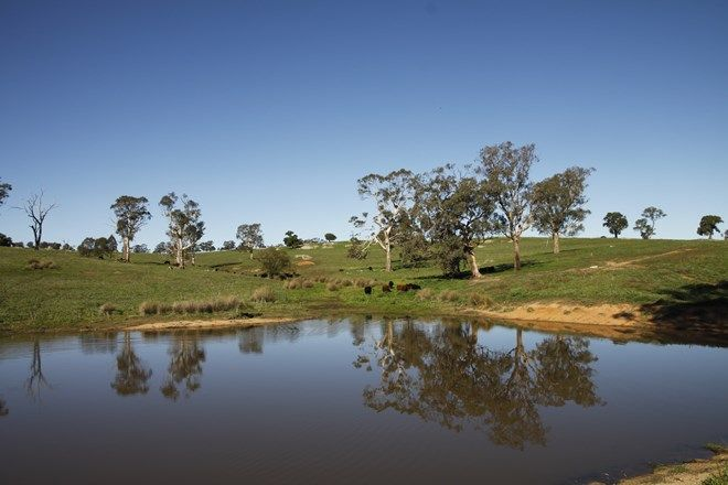 Picture of WOMBAT NSW 2587