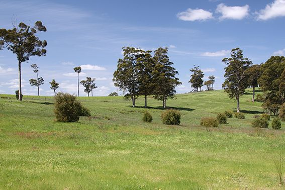 Lot 108 Wetherall Road, Quinninup WA 6258, Image 0