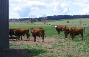 Picture of 90 Hewitt Road, Glen Innes NSW 2370