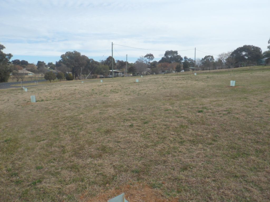 29 Sutton St, Canowindra NSW 2804, Image 0