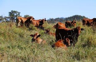 Picture of Sarina Range QLD 4737